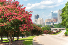 Looking Towards The Downtown Raleigh Skyline With Beautiful Crepe Myrtle Trees In Bloom.