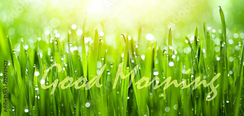 Fresh Green Grass With Dew Drops In Sunshine On Auttum And Bokeh And Word Good Morning Abstract Background Nature Background Texture Good Morning Buy This Stock Photo And Explore Similar Images