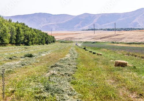 Photo Harvesting of alfalfa in bales