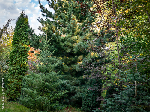 Original Green Background Of Mixed Texture Of Evergreens Thuja