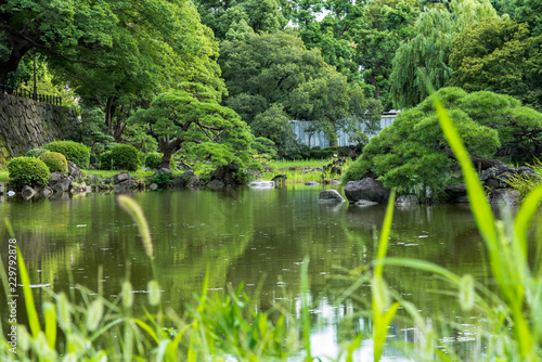 Shinji Pond in the public garden of Hibiya Park bordering the southern moat of the Imperial Palace Fototapet