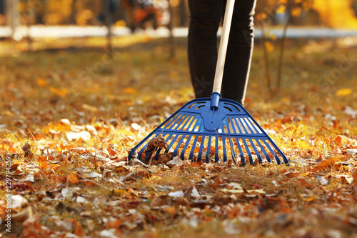 Slika na platnu Woman cleaning up fallen leaves with rake on sunny day