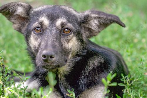 Portrait of a homeless dog mongrels Fototapete