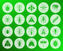 Danger Insect Shape Carved Flat Icons Vector Set