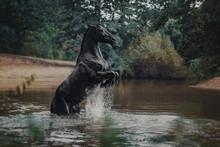 Black Horse In Water Like Blac...
