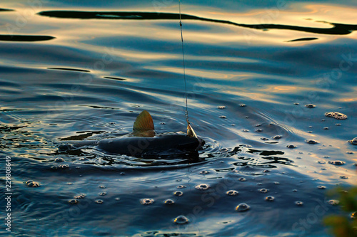 Valokuva  Spinning fishing (lure fishing) trout in lakes of Scandinavia.