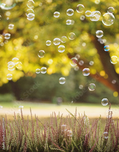 Soap bubbles flying above heather flowers