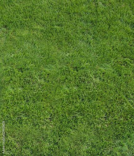 Piece of green, fresh lawn, summer sunny day