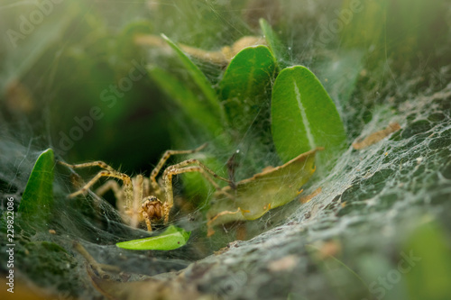 Tuinposter Macrofotografie A spider hidden in an oval web surrounded by leaves. Spider waiting in web to catch prey