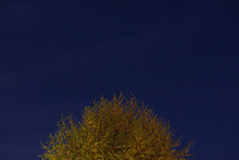 Autumn Silver Birch Tree With Night Sky And Stars Above