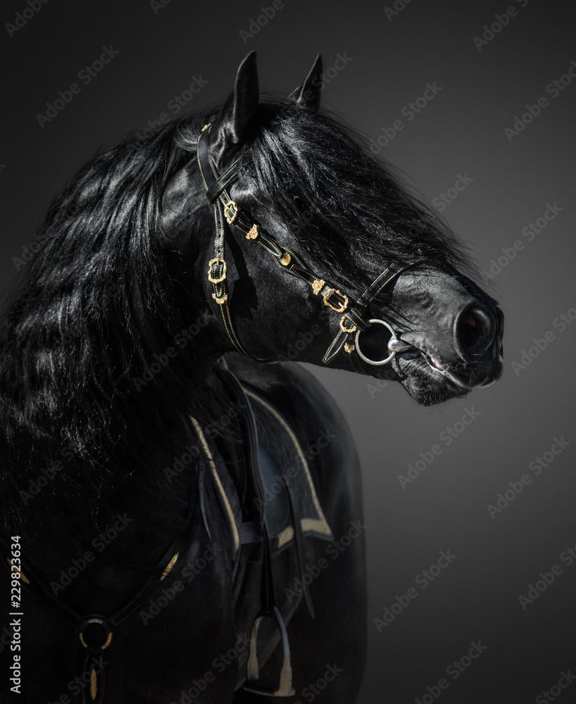Fototapety, obrazy: Hiszpański koń w portugalskiej barokowej uzdzie na ciemnym tle