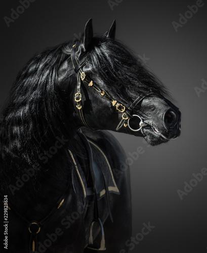 Obraz Hiszpański koń w portugalskiej barokowej uzdzie na ciemnym tle - fototapety do salonu