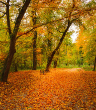 View Of A Footpath Covered With Colorful Autum Leaves In The Forested Part Of The Famous Maksimir Park In Zagreb, Croatia. Beautiful Autumn Scenery