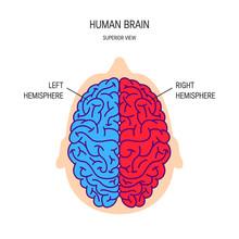 Human Brain Vector Concept
