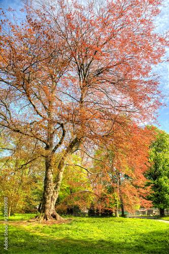 Wood Beech forest purple