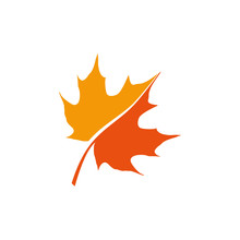 Maple Leaf Logo Icon Design Te...