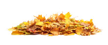 Heap Of Autumn Leaves On White Background