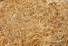 Dry Yellow Straw Grass Backgro...