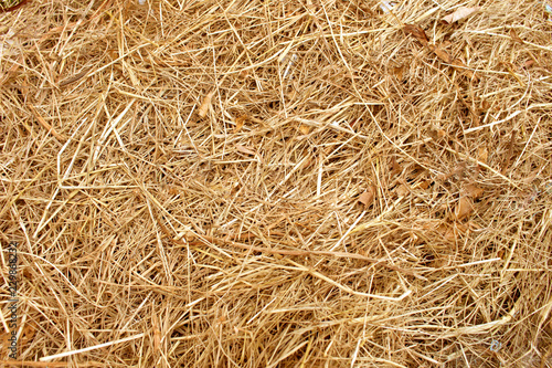 Dry yellow straw grass background texture Fototapeta