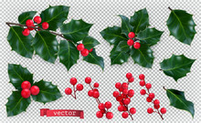 Christmas Decorations. Holly, ...