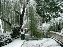 People Walk In Frozen Park