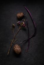 Lila Kartoffeln Mit Trieb