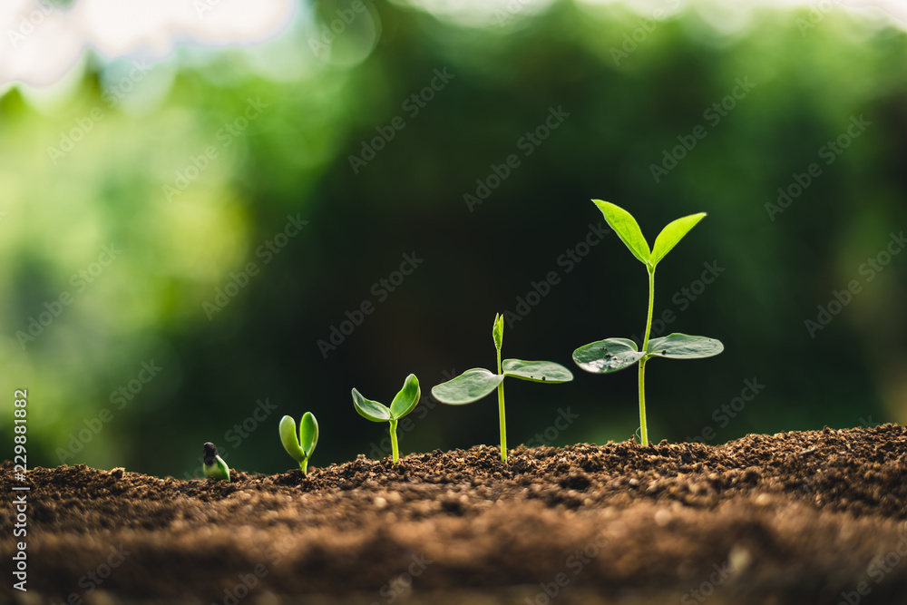 Fototapety, obrazy: Plant Seeds Planting trees growth,The seeds are germinating on good quality soils in nature