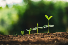 Plant Seeds Planting Trees Growth,The Seeds Are Germinating On Good Quality Soils In Nature