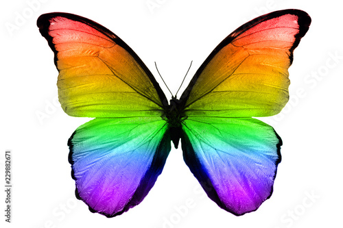 Fotografie, Obraz  beautiful multicolor butterfly isolated on white background