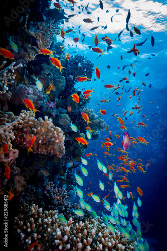 Fototapeta Colorful Reef