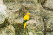 Bird, Wildlife And Zoo Concept - The Court Parrot , Sun Conure
