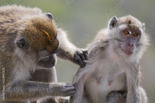 Tuinposter Aap Mother monkey and child