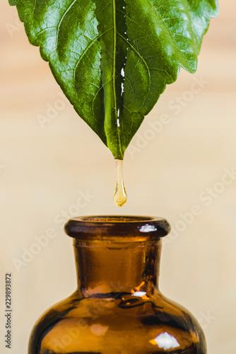 Fototapeta essential oil dripping from leaf into glass bottle isolated on beige obraz na płótnie