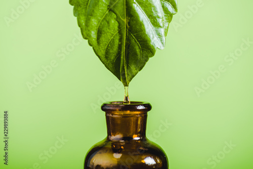 essential oil dripping from leaf into glass bottle isolated on green