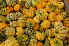 Tiger Mini Pumpkins In The Market Place. Background Of Pumpkins.