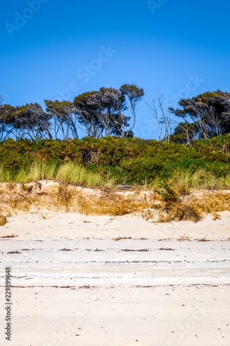 Poster Oceanië Dunes in Abel Tasman National Park, New Zealand