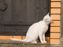 White Cat Rubs Against The Door.