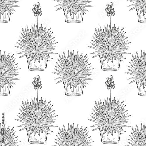 225 & Yucca.Flowering plant. A flower pot. Sketch. Wallpaper texture ...