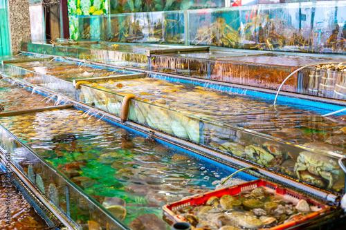 Foto op Plexiglas Indonesië Seafood market fish tank in Sai kung Hong Kong