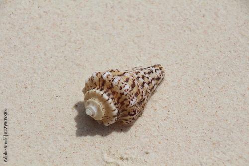 Haus der Meeresschnecke am Strand