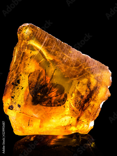 Leinwand Poster Amazing baltic amber with frozen in this piece a fly