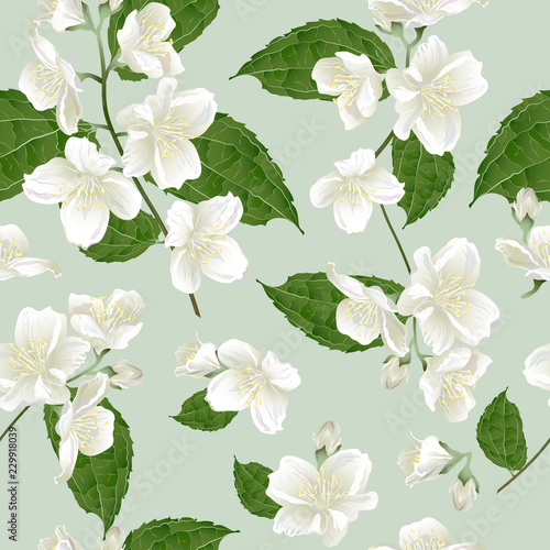 Photographie Seamless pattern with jasmine flowers