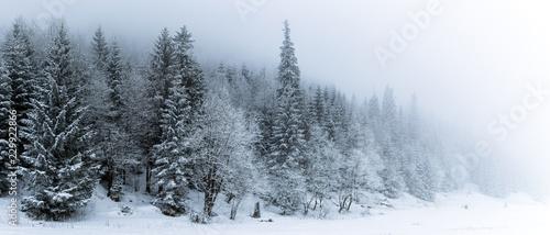 Zima biały las z śniegiem, Bożenarodzeniowy tło
