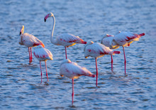 Flamingo In Sunset