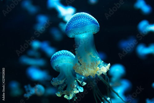 wild marine life scene with little jellyfish animals in aquarium