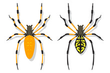 Banana Spider Vector Cartoon F...