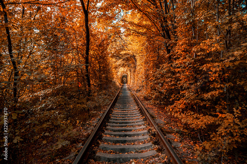 Photo sur Aluminium Marron love tunnel in autumn