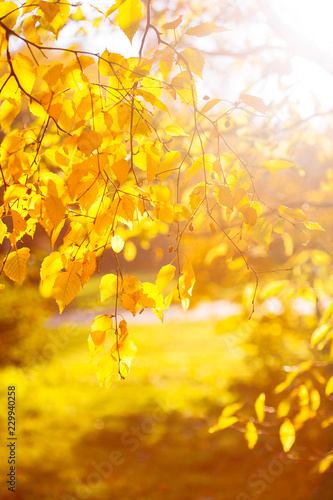 Papiers peints Vignoble Autumn leaves background in sunny day
