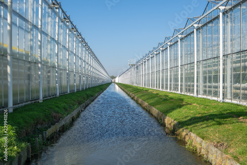 Valokuvatapetti Perspective view of industrial glass greenhouses in the Netehrlands