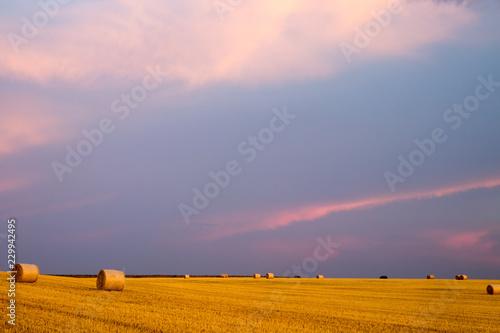 campo de trigo con cielo